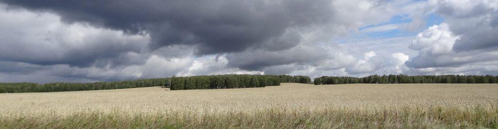 Бизнес план по выращиванию пшеницы