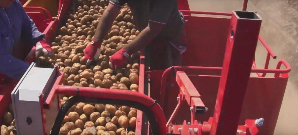 бизнес план выращивание картофеля
