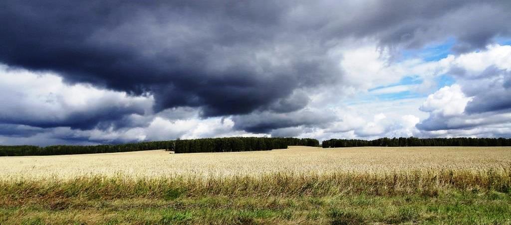 продам фермерское хозяйство под лпх