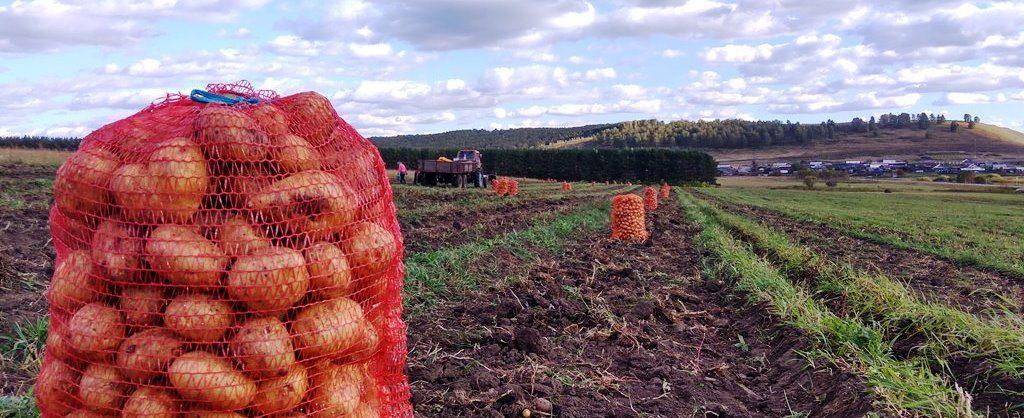 продается фермерское хозяйство